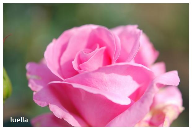 花フェスタ1.jpg
