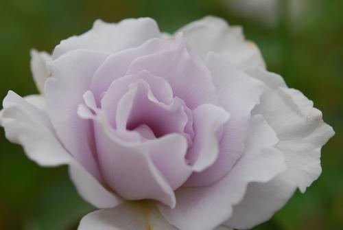 花フェスタ 178.jpg