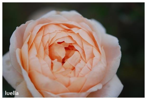 花フェスタ5.jpg