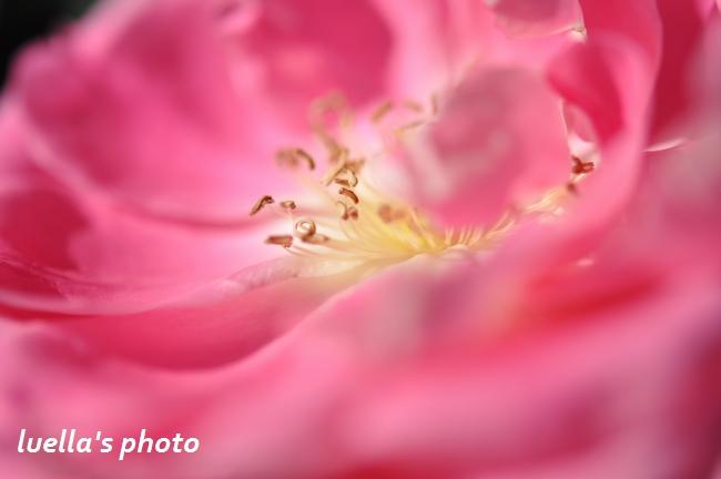 花フェスタ記念公園 166.jpg