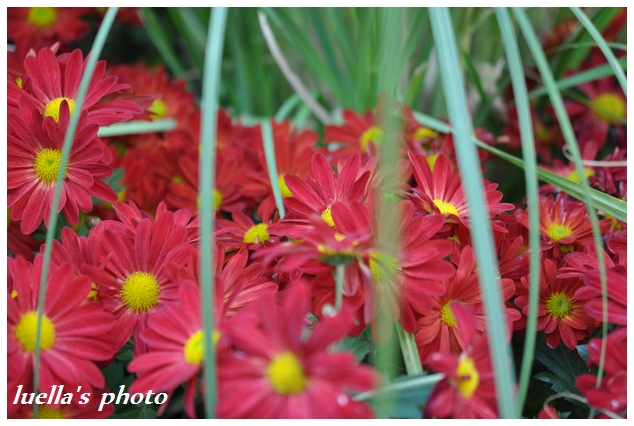 花フェスタ記念公園 168.jpg