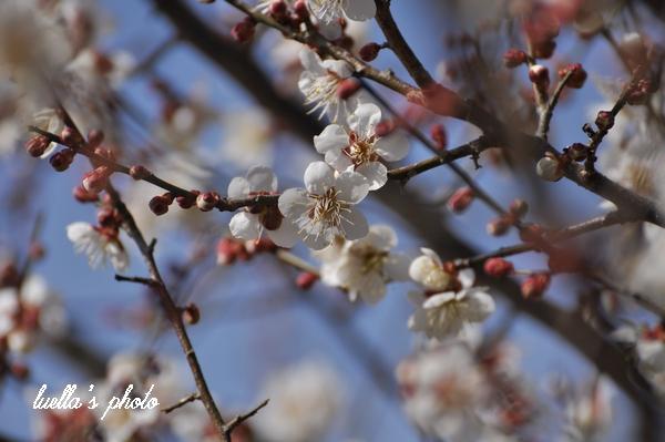 花フェスタ記念公園2月15日 200.jpg