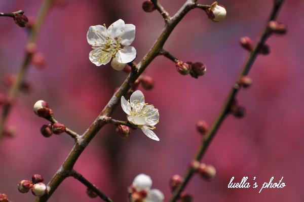 花フェスタ記念公園2月15日 201.jpg