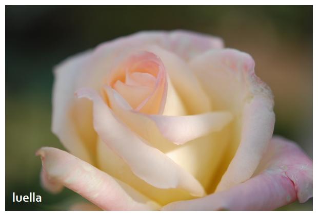 花フェスタ2.jpg