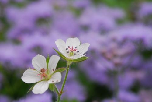 花フェスタ 180.jpg