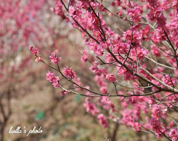 花フェスタ記念公園2月15日 202.jpg